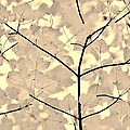 Leaves Fade To Beige Melody by Jennie Marie Schell