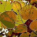 Leaves by Greg Thiemeyer