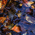 Leaves In A Puddle by Christine Czernin Morzin