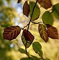 Leaves In The Breeze by Venetta Archer