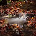 Leaves In The Creek by Mike Penney