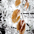 Leaves In The Frost by Michael Eingle