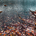 Leaves In The Lake by David Patterson
