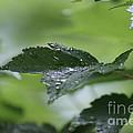 Leaves In The Rain by Jennifer E Doll