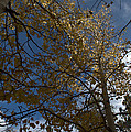Leaves In The Sky by Anjanette Douglas