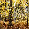Leaves In The Woods by Gej Jones