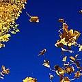 Leaves by Kristy Jeppson