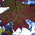 Leaves Of Red by Jeannette Cruz