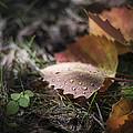 Leaves Of The Aspen by Tim Radl