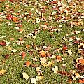 Leaves On Grass by Kenny Glover