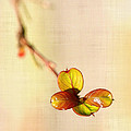 Leaves On Linen by Judi Bagwell