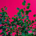 Leaves On Pink Back Lit Sky Abstract by Tahlula Arts