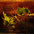 Leaves On Texture by Roberto Pagani