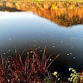 Leaves On The Lake by Susie Loechler