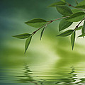 Leaves Reflecting In Water by Aged Pixel