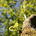 Leaves by Steve Ball