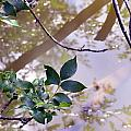 Leaves With Reflection by Kathy Johnson