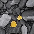 Leaves With Rocks by Carl R Battreall