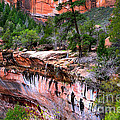 Ledge At Emerald Pools In Zion National Park by Rincon Road Photography By Ben Petersen