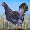 Legbar Chicken by Judy Bruning