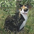 Leia Cat In Blueberries by Lucinda VanVleck