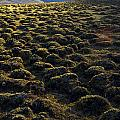 Lemmings by Aaron Bedell