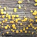 Lemon Drops by Doris Potter