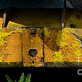 Lemon Peel by Rene Triay Photography