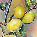 Lemon Tree by Patricia Novack