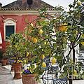 Lemon Trees On A Villa Terrace by George Oze