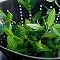 Lemon Verbena Herbs by Romulo Yanes