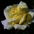 Lemoncandy by Doug Norkum