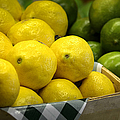 Lemons And Limes by Julie Palencia