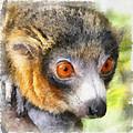 Lemur 004 by Ingrid Smith-Johnsen