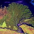 Lena Delta by USGS Landsat