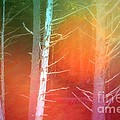 Lens Flare In The Forest by Tara Turner