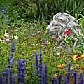Leo In The Garden by MTBobbins Photography
