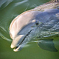 Dolphin by MLP Photography