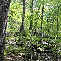 Leominster Massachusetts State Reservation by Spirit Baker