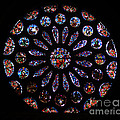 Leon Spain Cathedral Rosette by Rudi Prott