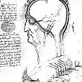 Leonardo: Brain, C1490 by Granger