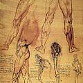 Leonardo: Legs, C1508 by Granger