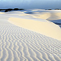 Leoncois Maranhenses Beauty Of Sand by Bob Christopher