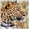 Leopard 7 by Ingrid Smith-Johnsen