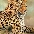 Leopard by David Stribbling