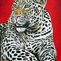 Leopard by Ilse Kleyn