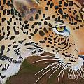 Leopard In Botswana by Amanda Schuster