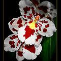 Leopard Orchid by Debra     Vatalaro
