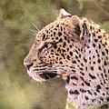 Leopard Portrait by Liz Leyden