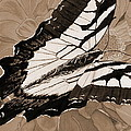 Lepidoptery - Sepia by Joel Deutsch